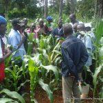 Farmer field schools & traininf